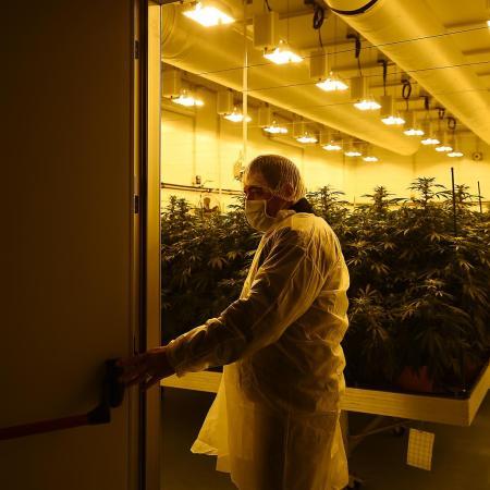 Italy Cannabis
