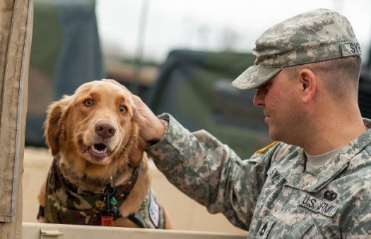 PTSD is one of the most common service-related ailments affecting active duty military personnel and veterans. Animal therapy has been shown to be effective in treating symptoms of PTSD. Cannabis can be a very effective supplement to pet therapy and has been shown to have strong healing benefits in its own right.