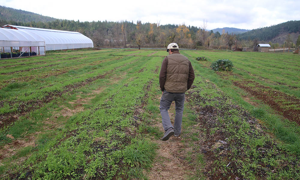 Cody Alter Farms Oregon Marijuana Cover Crops Cannabis Now