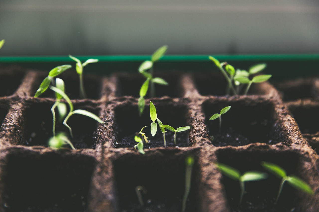 Growth Cycle Stages Germination Vegetation