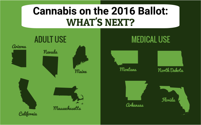 Cannabis on the 2016 Ballot: What's Next?