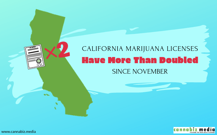 California Cannabis Licenses Have More Than Doubled Since