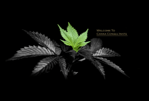 Canna Consultants banner 3