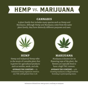 Hemp v Marijuana