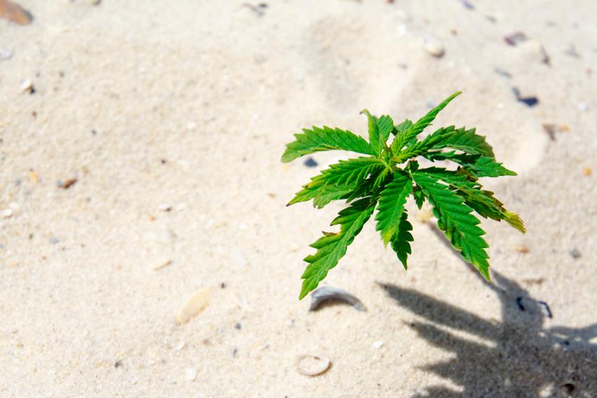 So, Is It Legal To Grow CBD Hemp Flower In New Jersey?