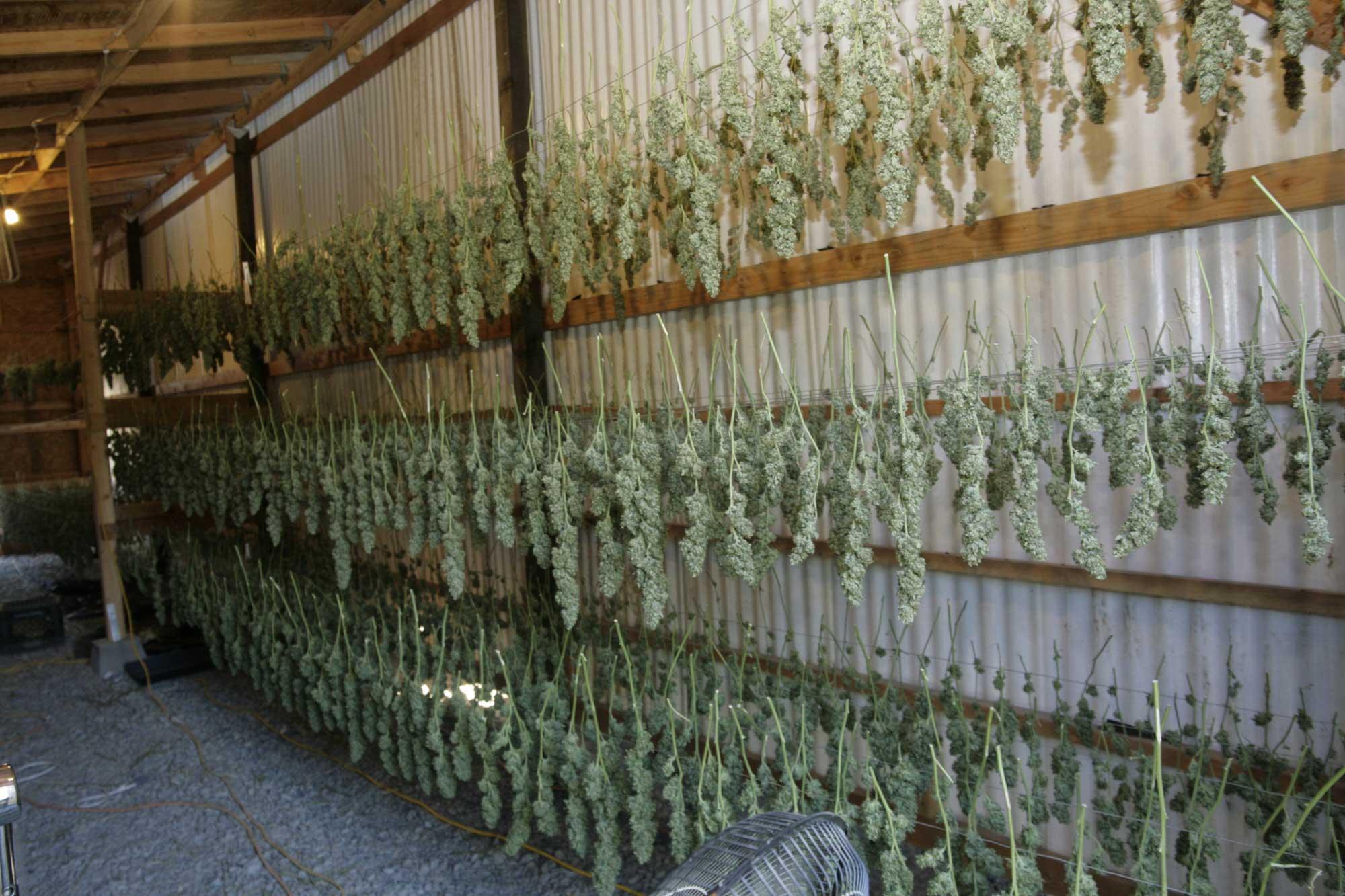 Build Indoor Hydroponic Grow Box