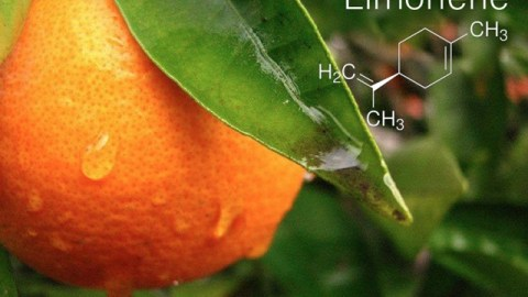 CannaGlobe Key Cannabis Terpenes Limonene