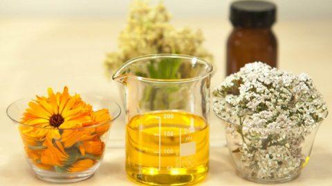 CannaGlobe Key Cannabis Terpenes Phellandrene