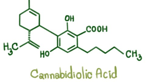 What Is Cannabidiolic Acid?