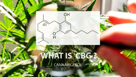 What is Cannabigerol?
