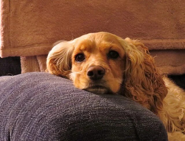 CBD Oil for Dogs: Guide for Dog Owners – Alaska Dog Works