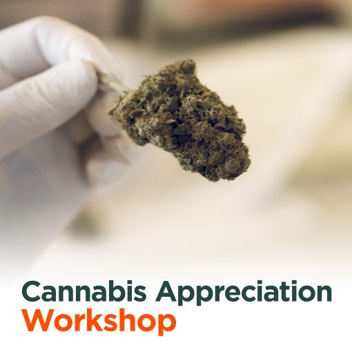 Cannabis workshop on cannabis lineage