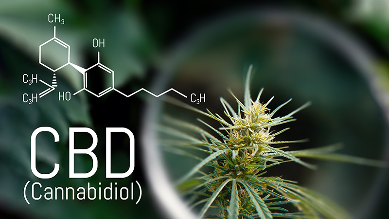 cbd science
