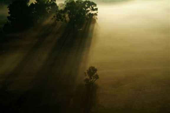 Misty Trees in the Yarra Valley