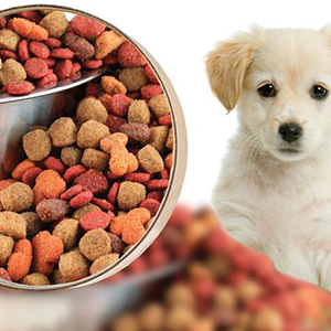 Pet Foods & Supplies
