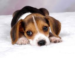 Here's a sad puppy for those of you who know what I mean