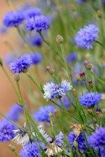 92 CannonHallGuideBook_7575-gardens