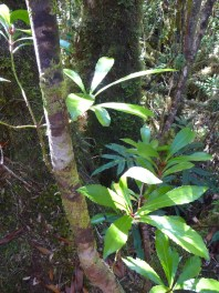 14.rainforest1