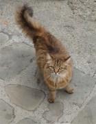 24.cat