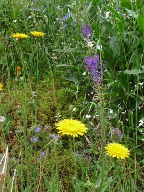 26.wildflowers