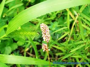 buds and seeds