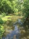 wetlands by woods