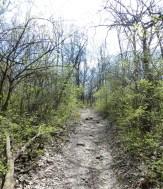 rocky path