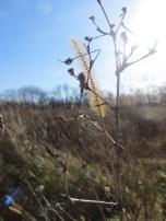 fall sunlit prairie