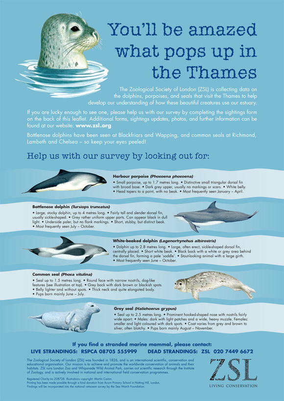 Poster showing how to identify seals, dolphins and porpoises in the River Thames