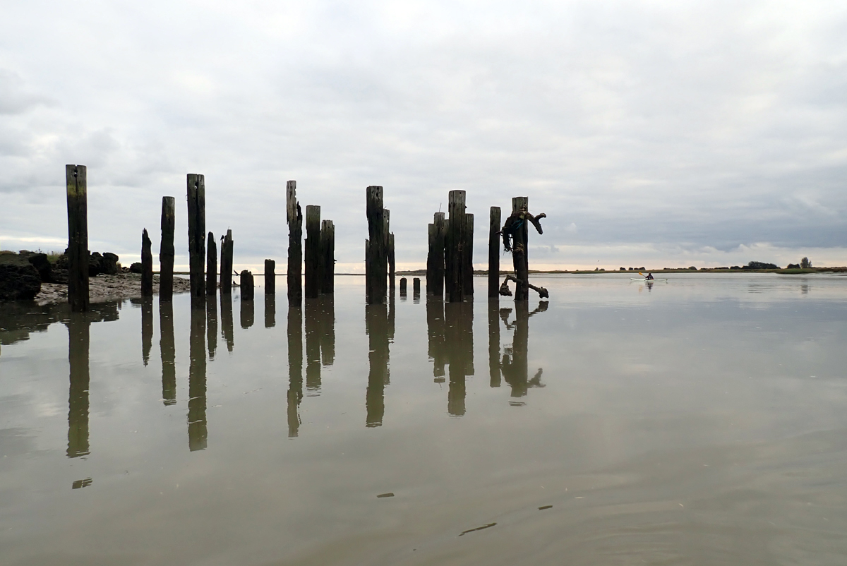 Salvation Army Wharf on Benfleet Creek. About 20 squared timber posts rise from the creek by the shoreline. They are reflected in the still water.