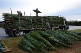 Load of Fraser Fir Christmas Trees from Quebec
