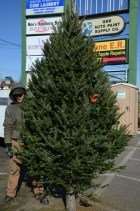 Large and full 9' Christmas Tree