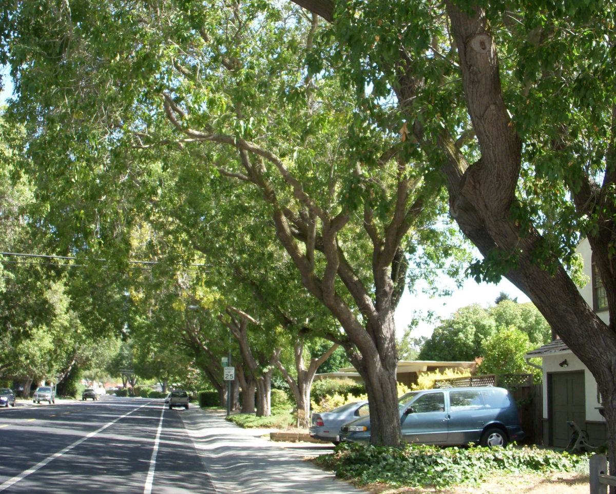 Request A Street Tree Canopy Canopy