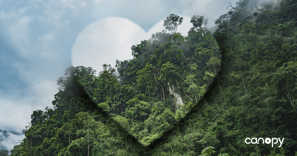 2) in november 1971, states members in the 16th session of the conference of food and agriculture organization decided to observe 21 st march as world forestry day. International Day Of Forests A Love Letter To The Ancient And Endangered Forests Of The World Canopy And The Printing House Canopy