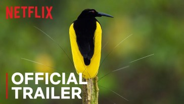 Dancing With The Birds | Trailer Oficial | Netflix, Dancing With The Birds | Trailer Oficial | Netflix