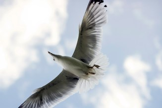 """He was not bone and feather but a perfect idea of freedom and flight, limited by nothing at all"" Jonathan Livingston Seagull"