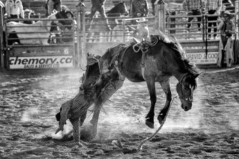 More bronc riding (or should that be diving?)