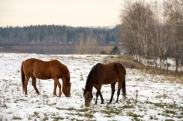 And some cold horses,