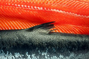 Salmon Interior/Exterior