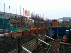 park-farm-allotments-004