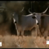 documentario riforma agraria maremma