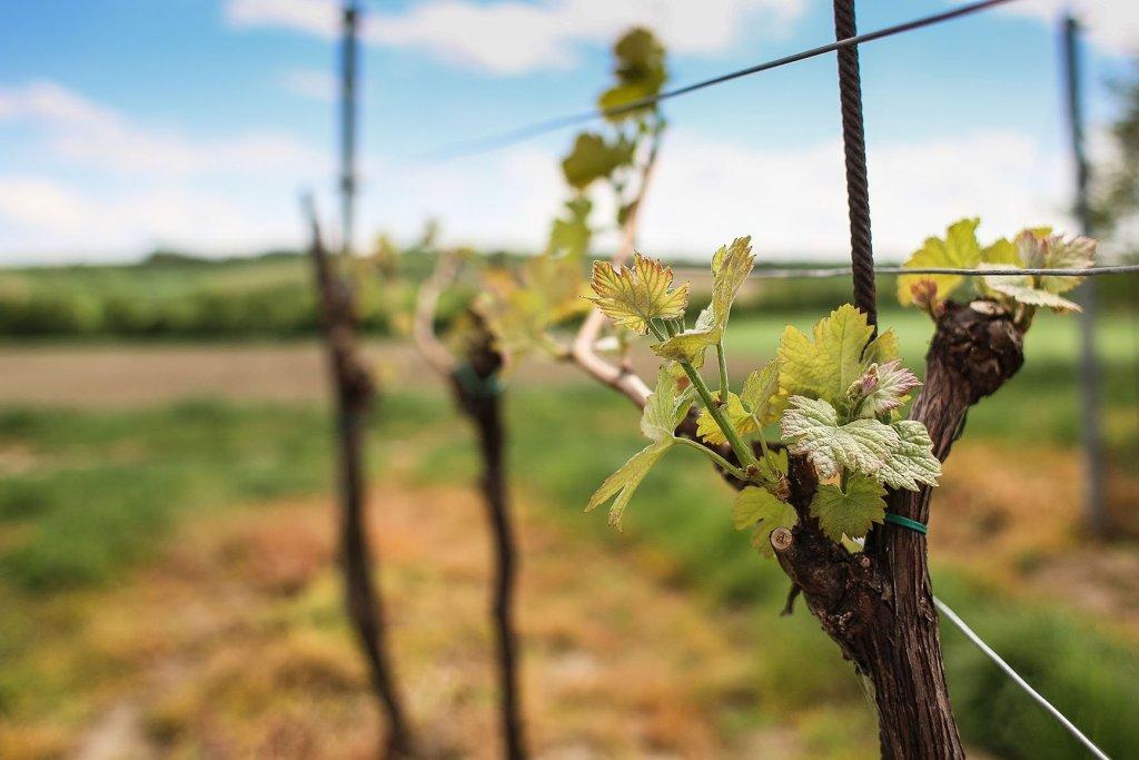 The wines of Gallura - Cantina Murales