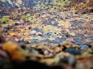Lavorazione del Vin Santo di Vigoleno: pellicola di pulitura