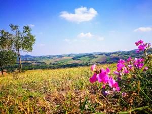 Panorama di primavera dei colli piacentini da Cantina Visconti