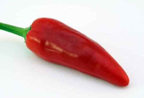 Pimenta Jalapenho Vermelha