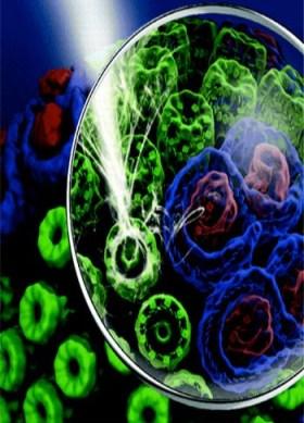 Diagrama de estruturas coletoras de luz, cada uma com mais de uma dúzia de moléculas de clorofila suspensas em arranjos circulares, encontradas bactérias púrpuras fotossintetizantes. A luz incidente é capturada em coerência quântica. Áreas abaixo da ilustração da lente de aumento mostram detalhes internos. Créditos da imagem: Copyright © 2012 American Chemical Society. Adaptada para uso de acordo com a lei de direitos autorais (doutrina de uso justo). Uso pelo Cantinho da Unidade não implica em aprovação pelos detentores dos direitos autorais.