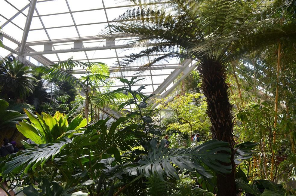 brooklyn botanic garden plantas