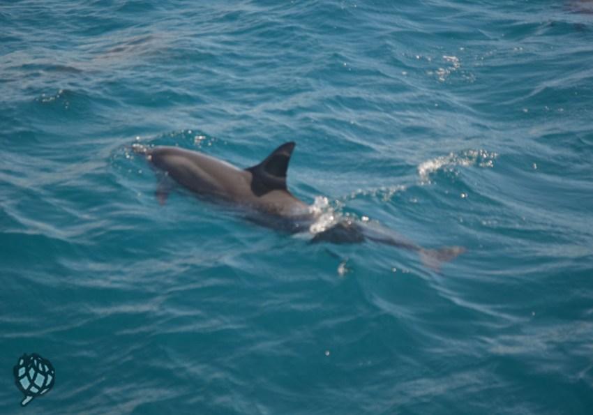 golfinhos em Fernando de Noronha com crianças