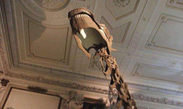 Museu de História Natural de Viena – Magnífico
