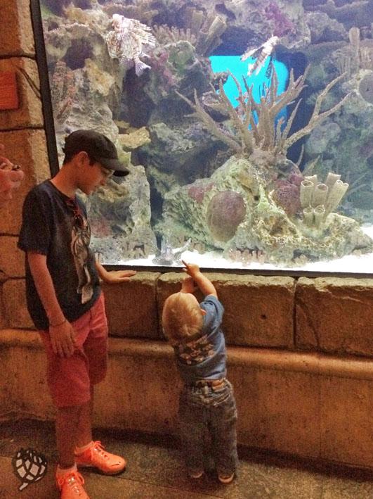 Aquario LV Arthur com amigo
